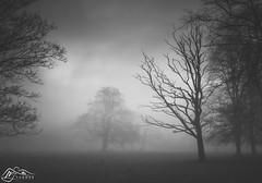 Rickerby Park (►►M J Turner Photography ◄◄) Tags: rickerbypark cityofcarlisle carlisle cumbria england uk unitedkingdom