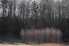 spring (Mindaugas Buivydas) Tags: lietuva lithuania color spring march tree trees birch shallowdepthoffield birštonas nemunokilpųregioninisparkas mindaugasbuivydas