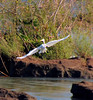 Bird soaring in Patagonia in Iguazu Falls (jillrowlandwv) Tags: birdflying birdsoaring forest jungle travel patagonia condorargentina chile southamerica tour tourist tourism outdoors hiking mountain wildlife penguins birds sea lake water reflection glacier scenery landscape nature naturalbeauty natural canon canonphotography canonaddicts canonphoto canonphotos sealion coastline grazing penguin