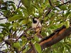 Urban Bird (José Miguel S) Tags: bird ave pájaro animal fauna faunaurbana urbanfauna