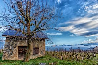 Sur la route des vins de Savoie  - Apremont  - (Savoie * Mars 2018)