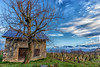 Sur la route des vins de Savoie  - Apremont  - (Savoie * Mars 2018) (gerardcarron) Tags: 1022 arbre cabane canon80d ciel cloud hiver hut matin morning nature nuages paysage savoie vigne winter apremont
