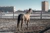 Hippodrome (Marie Villars) Tags: hippodrome horses horse