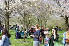 IMGP2833 (hans03) Tags: cosplay wettbewerb marzahn gärten der welt kirschbäume blüte kirschblütenfest 2018