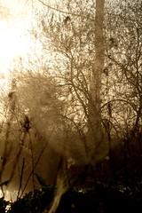 Mole in the mist (smcnally24601) Tags: mist river mole surrey britain british england english morning spring betchworth