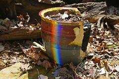 Look for the Broken Pot (BKHagar *Kim*) Tags: bkhagar rainbow flowerpot pot broken refraction riversong elkriver athens al alabama home yard outdoor dirt potting
