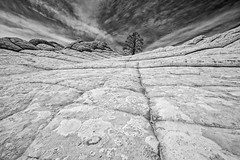Lone Tree (Patty Bauchman) Tags: arizona southwest vermilioncliffsnationalmonument whitepocket polygonalcracks blackandwhite