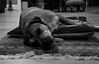 life is hard (Coast to Coast and In Between) Tags: dog guinness sleep home canine sony hardday blackandwhite bw