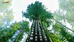 主题经文- 名声 (追逐晨星) Tags: 圣经金句 金句卡片 金句 经文 名声 树木