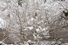 (chrishowardphotography.com) Tags: winterinohio winterphotography winterscene
