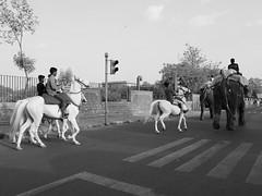 Horses and Elephants (solas53) Tags: horses elephants india street road white black blackwhite blackandwhite bw monochrome people boys riding animals animal