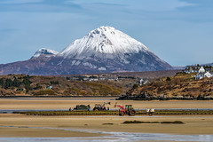 """""""Atlantic Oyster Harvest"""" (Gareth Wray - 10 Million Views, Thank You) Tags: mount errigal mountain famous derryveagh mountains landscape snow capped snowing winter ice view gweedore carrickfinn county donegal ireland irish field countryside nature sand beach bay mussel gathering mussels farming tractor mts mt gareth wray photography nikon d810 nikkor 70200mm lens scenic drive landmark tourist tourism location visit sight site dunlewey lake lough church chapel poison poisoned glen valley grassy spring moor day photographer vacation holiday europe grassland sky water sea shell food"""