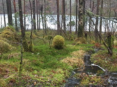 Who laid the big egg? (svennevenn) Tags: bergen skoger forests mose moss