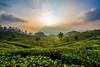 15727185_10154933587160159_5865142553381890090_n (shutterbugtrails) Tags: munnar kerala keralahillstations landscapephotography nikon keralaphototours indianphototours teagardens tatatea kolukumalai