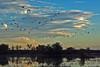 Sandhill Cranes at Bernardo refuge (aka Ladd S. Gordon Wildlife Complex), New Mexico, USA. (cbrozek21) Tags: 7dwf landscape newmexico cranes sandhillcranes water evening eveninglight sunsetlight trees birds nature