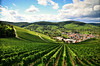 Sunny Day (DrQ_Emilian) Tags: landscape view vineyards hills sky clouds light shadows colors details patterns outdoors town rural countryside travel visit explore wanderlust sunlight sunny stetten kernen remstal badenwürttemberg germany europe photography hobby