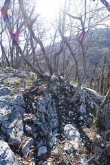 Viewpoint @ Col du Pré Vernet @ Hike to Mont Veyrier & Mont Baron (*_*) Tags: annecy france hautesavoie europe april 2018 spring printemps hiking mountain forest montveyrier hike randonnée trail morning matin colduprévernet pass viewpoint pointdevue belvédère