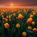 Foggy Tulips