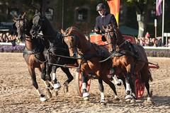 Hengstparade Warendorf (ow54) Tags: hengstparade hengste pferde horses gespann vierergespann carriage warendorf