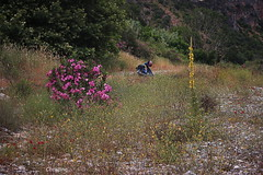 a nice place (christinehag) Tags: motorcycle wildflowers moto nature