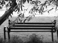 A bench with view!!  P1050249 (amalia_mar) Tags: 7dwf bw bench sea tree view dreams beach coast