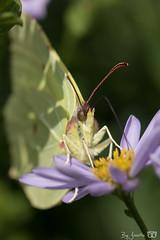 DN9A4599 (Josette Veltman) Tags: garden tuin tuinfoto groen natuur nature garten jardin flowers bloemen