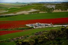 EL TIEMPO  ETERNIZADO (marthinotf) Tags: cementerio primavera tierradecampos amapols trigos cebadas amapolas tumbas silencioeterno eltiempoeternizado camposdecastilla elrumordelviento
