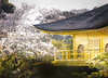 _MG_7775-2 (JoanCanalsPhotography) Tags: japan japon asia traveling joancanals flowers bamboo hanami bambooforest forest goldentemple kiyomizudera temple sintoismo