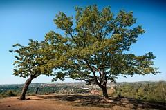 2018-06-15_01-12-15 (xskyven) Tags: nature trees praha prague landscape czech cityscape horizont green sky troja vyhlidka view