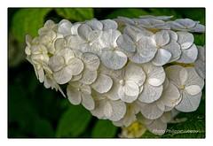 DSC00140T__resultat (philippejubeau) Tags: paris jardin plantes botanique