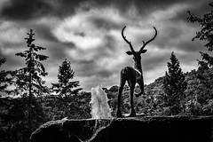 Deerhurst Fountain (rick miller foto) Tags: fountain deer deerhurst huntsville ontario north country wilderness cottagecountry muskoka statue black white bw mono monotone canon 80d sigma 1750mm 28
