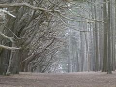 tree tunnel (Jef Poskanzer) Tags: tree tunnel fitzgeraldmarinereserve geotagged geo:lat=3752269 geo:lon=12251677 t cypress