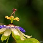 Amazing flower thumbnail