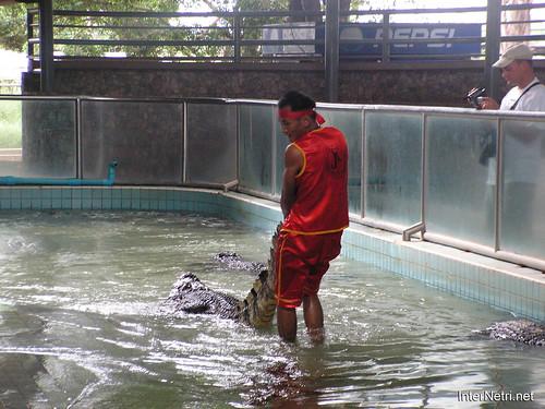 В пащу крокодилу Паттайя Таїланд Thailand InterNetri 01