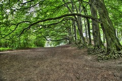 Moleskin and Markham (Vishca) Tags: trees meadows grassland canon6d canon24105l hdr nationaltrust countryside streatley inspiredbylove beautifulcapturegroup woods beautifulcapture branch branches