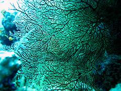 (sharksfin) Tags: sudan redsea rotes meer deepsouth ocean sea