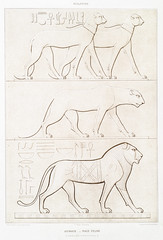Animals - feline from Histoire de l'art égyptien (1878) by Émile Prisse d'Avennes (1807-1879). Digitally enhanced by rawpixel. (Free Public Domain Illustrations by rawpixel) Tags: egyptian otherkeywords anillustrationoftheegyptian ancient ancientegyptian ancientegyptianart animal antique archaeological archeology architecture art bastel bastet carving catgoddness cc0 design designing drawing dynasty egypt egyptiancats egyptiankingdom egyptianstructures egyptien egyptology empire feline gods handdrawn histoiredelartégyptien historical history illustration mythology old outlines outlinesfromtheantique pattern psd publicdomain romans sepia sketch story symbol tomb traditional vintage worship émileprissedavennes