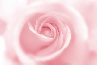168/365: I dream in pink