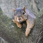 7/365/3659 (June 18, 2018) - Squirrels at the University of Michigan on a Hot day in Ann Arbor (June 18th, 2018) thumbnail