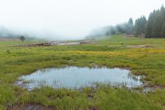sur le plateau (nicolas_lottin) Tags: herbouilly isèredépartement lieux vercors