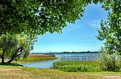 Am Uckersee (garzer06) Tags: prenzlau brandenburg deutschland landschaft wasser baum grün landschaftsbild landschaftsfoto naturephoto landscapephotography naturphotography blau naturfoto naturfotografie landschaftsfotografie uckersee