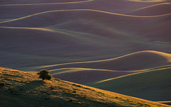 Waves of Green (Laura Y Lin) Tags: palouse green steptoebuttestatepark