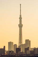 Skytree 晴空塔 (里卡豆) Tags: katsushikaku tōkyōto 日本 jp olympus 75mm f18 神之光 olympus75mmf18 epl9