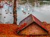 Autunno al Parco Rio Gamberi (Luca Nacchio) Tags: autunno parco rio gamberi castelnuovo rangone modena magia autumn park magic
