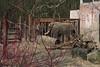 MWE-20180325-016 - bewerkt.jpg (Schuttermajoor1974) Tags: afrikaanseolifant ouwehandsdierenpark dierentuin rhenen utrecht nederland nl