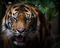 IMGP2892 (nathanmeade_) Tags: melbounrezoowerribee zoo animals tamron pentax k1 pentaxian pentaxk1 werribee melbourne zoos