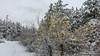 Spring or Winter (Milen Mladenov) Tags: 2018 bulgaria landscape montana earlyspring forest latewinter nature season snow spring tree walk winter