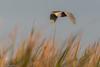 Florida 2018 (eric-d at gmx.net) Tags: florida egret heron osprey eric