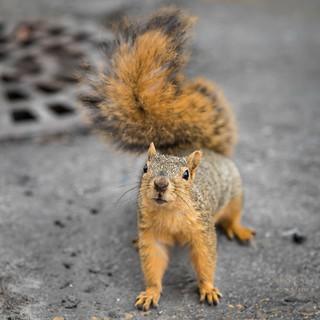 Day 140 | Squirrel!