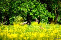 AAC_6095_watermarked (Quentin CUVELIER) Tags: 06000000 06006000 06006004 10000000 10003000 accompagnementsgarnituresetsauces base condiments d7000 environnement franã§ais french gastronomie marais nikon nikonlens nourriture objectifnikon photo photoculinaire photodecuisine photographie photography piments quentincuvelier ressourcesnaturelles sujets vert viequotidienneetloisirs biche environmentalissue fleurs flowers gastronomy green lifestyleandleisure maraispotevin naturalresources potevin wetlands
